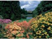 Průhonický rozkvitnutý park